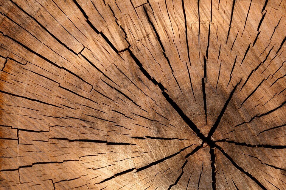 Cross section of tree cut for timber